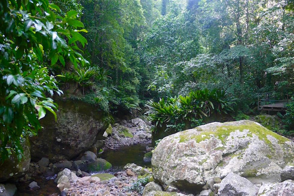 Plätschernde Bachläufe - Minnamurra Rainforest - Kiama - New South Wales