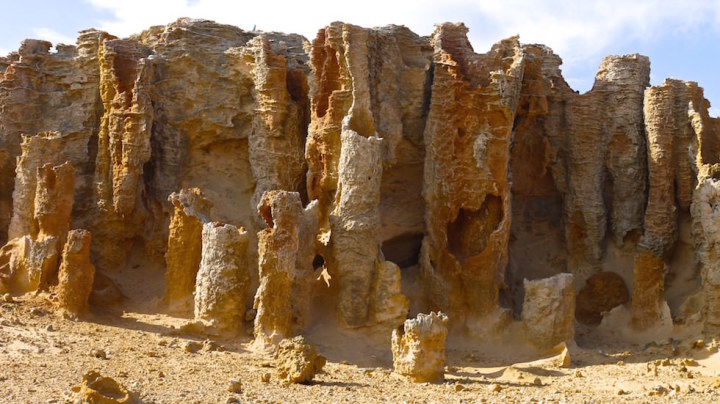 Petrified Forest at Cape Bridgewater