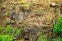 Curio Bay – Zwei Highlights: Gelb-Augen-Pinguine tummeln sich auf einem versteinerten Wald