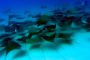Cabo Pulmo – Faszination Tauchen & Tausende fliegender Mobula-Rochen!