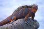 Galápagos- North Seymour Island – Überwältigend vielfältig & die Schönste!