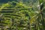 Die weltbekannten Reisterrassen von Bali – Die Reisgöttin & das unendlich grüne Hinterland