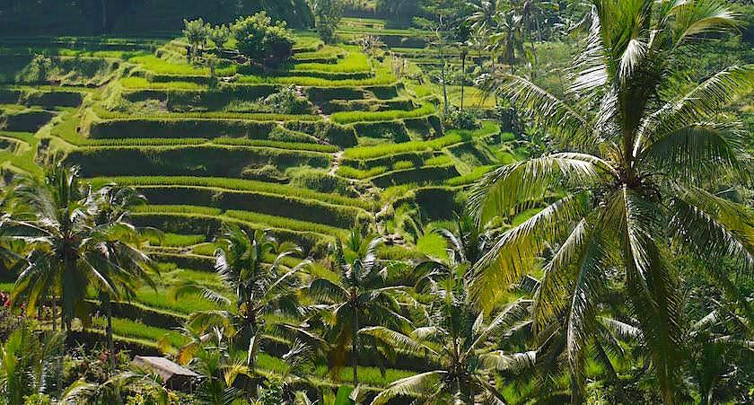 Tegallalang Reisterrassen Bali - Himmelstreppen zu den Göttern - Indonesien