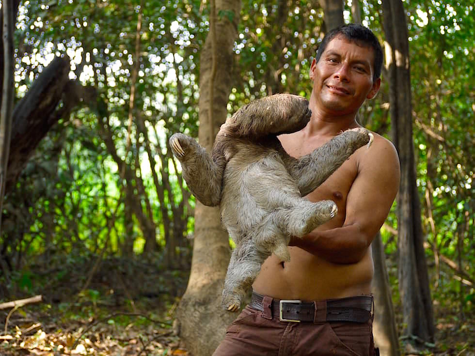 Faultier - Abenteuer Amazonas Dschungel Tour - Peru