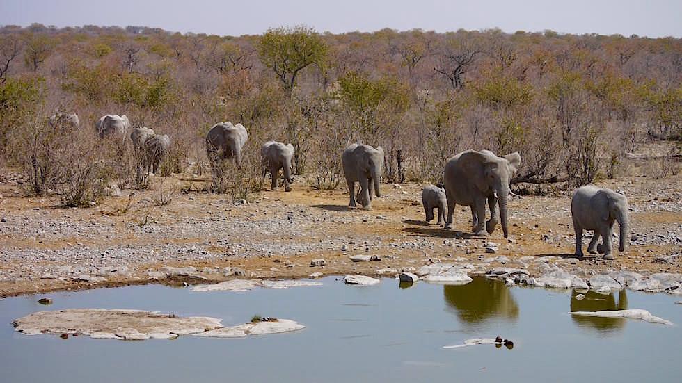 Elefanten gehen Wasserloch Etosha Nationalpark Namibia