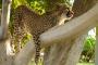 Namibias Geparden Farmen – Wildkatzen hautnah! – Otjitotongwe Cheetah Park