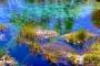 Pupu Springs – Te Waikoropupū Springs: Reinstes Wasser, schönste Farben!