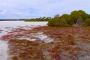 Coorong National Park, Pelican Island & Lake Albert – Faszinierende Natur & grandioses Wildlife!