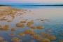 Thrombolithen – Lebende Steine von Lake Clifton: Sprungbrett in die Evolution!