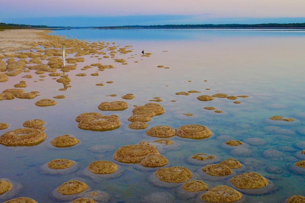 Lebende Steine - Thrombolithen am Lake Clifton - Sonnenuntergangsstimmung - Western Australia