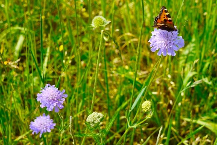 Wiesengänger Route - Schmetterling & Blumen - Wandertrilogie Allgäu - Bayern