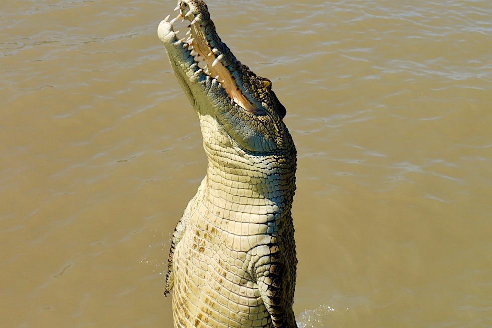 Jumping Crocodile Cruise - Springende Salzwasserkrokodile: Highlight Top End - Adelaide River - Northern Territory