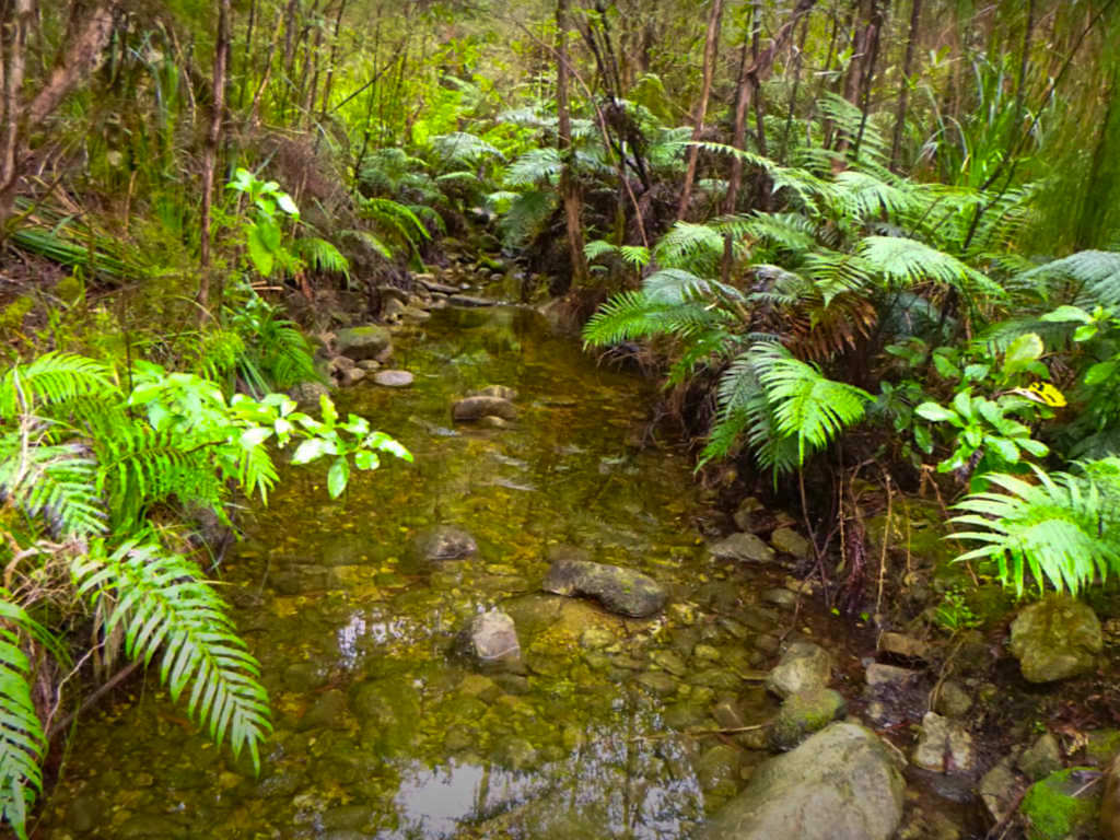 Campell Creek - Pupu Hydro Walkway - Südinsel Neuseeland