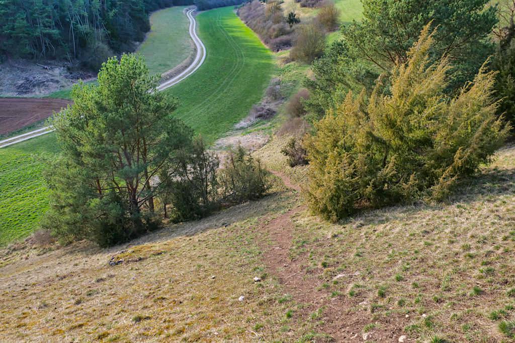 Abstieg zum Parkplatz - Traumschlaufe Eichstätt Nr. 14 Wanderung - Altmühltal, Bayern