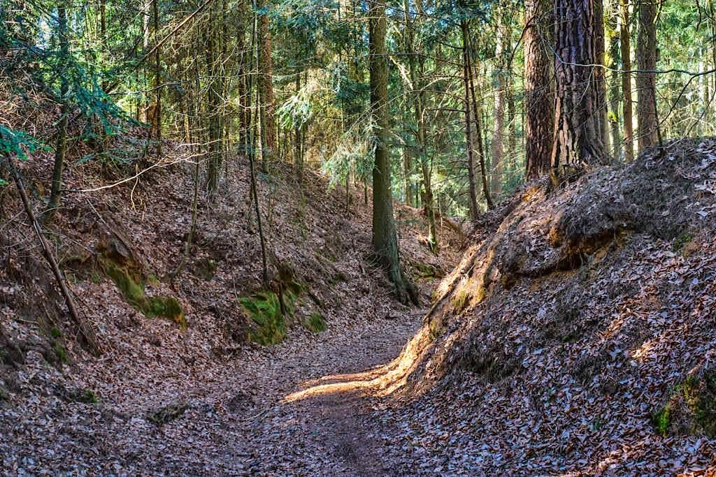 Häferloch - Waldweg von den Sinterterrassen Hoher Brunnen nach Weidenwang - Altmühltal, Bayern
