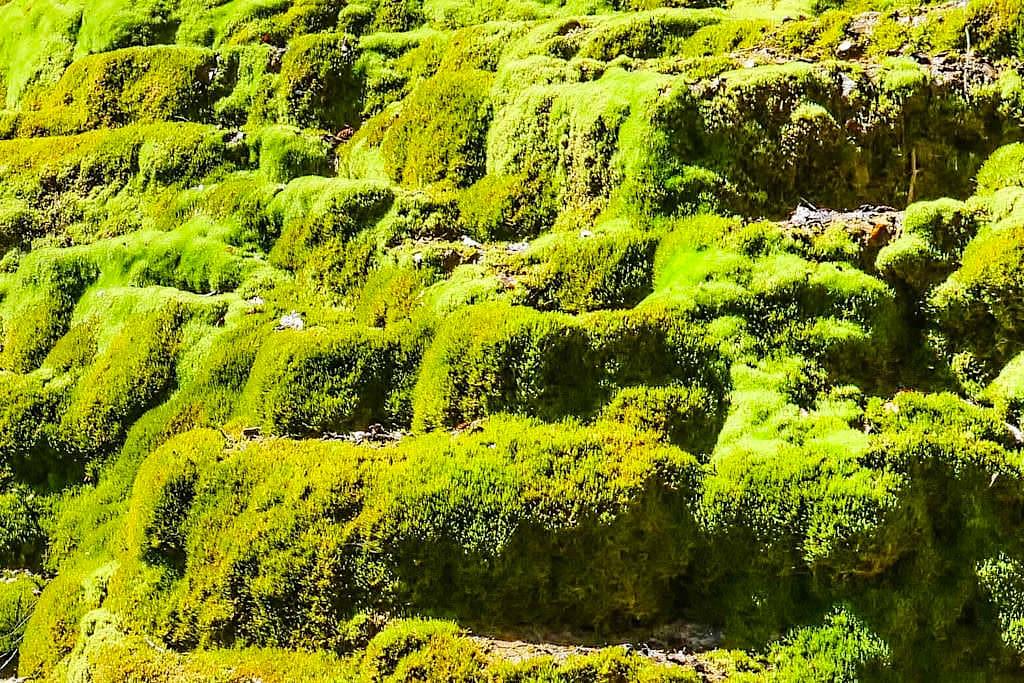 Faszinierendes Naturwunder: Sinterstufen Hoher Brunnen - Moosbewachsener Kalksteintuff bei Sollngriesbach im Naturpark Altmühltal - Bayern