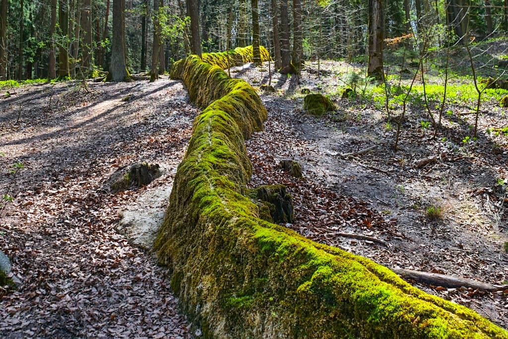 Steinerne Rinne aus Kalktuff bei Erasbach - Fragiles Altmühltal Geotop & Naturphänomen - Bayern
