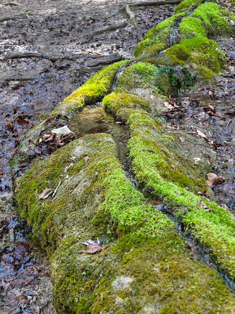 Steinerne Rinne aus Kalktuff - Wachsende Steine bei Erasbach im Altmühltal - Bayern