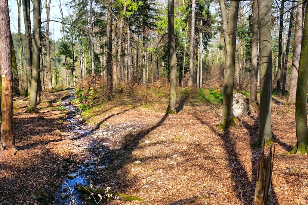 Idyllische, versteckte Waldwege auf der Wanderung von Sinterterrassen Hoher Brunnen nach Weidenwang - Naturpark Altmühltal, Bayern