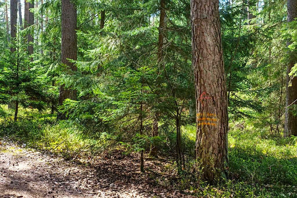 Waldweg zu den Sinterterrassen Hoher Brunnen - Erasbach im Altmühltal - Bayern