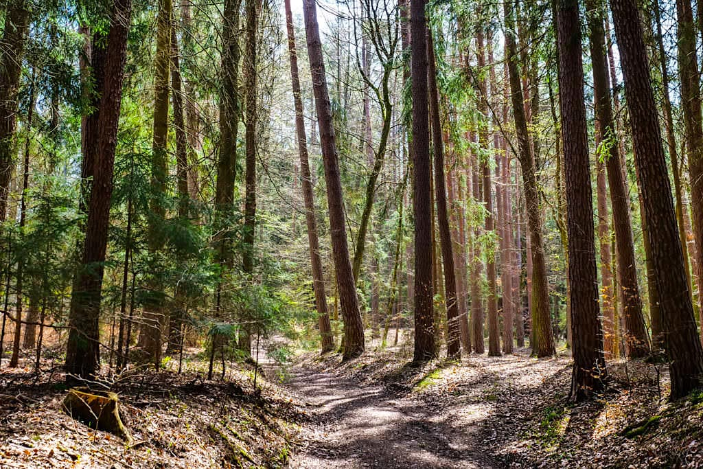 Waldweg zur Steinernen Rinne von Erasbach im Altmühltal, Bayern