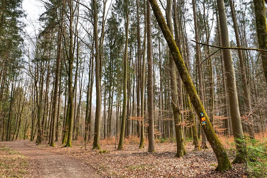 Waldwege auf der TraumSchlaufe Eichstätt Nr. 14 Rundwanderung - Altmühltal, Bayern
