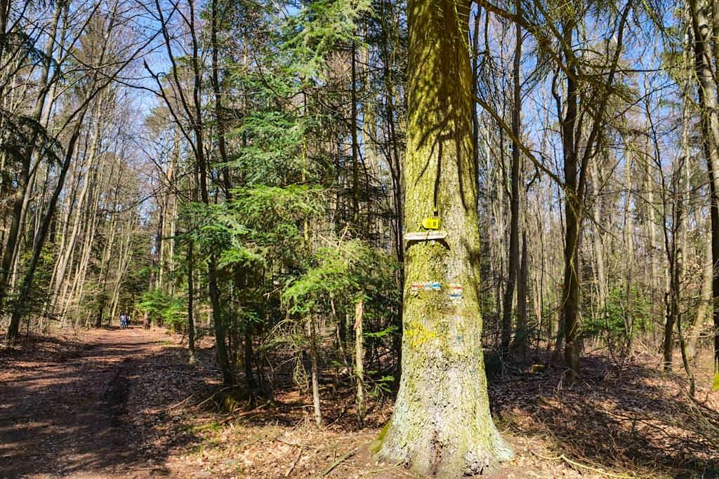 Waldweg von den Sinterterrassen Hoher Brunnen zum Burgstall Häfnerloch - Rundwanderung beiErasbach, Bayern